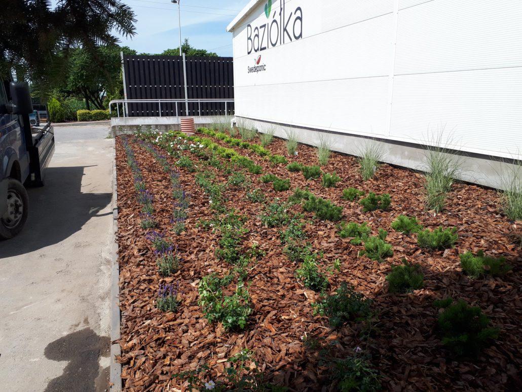 zalozenie ogrodu dla firmy
